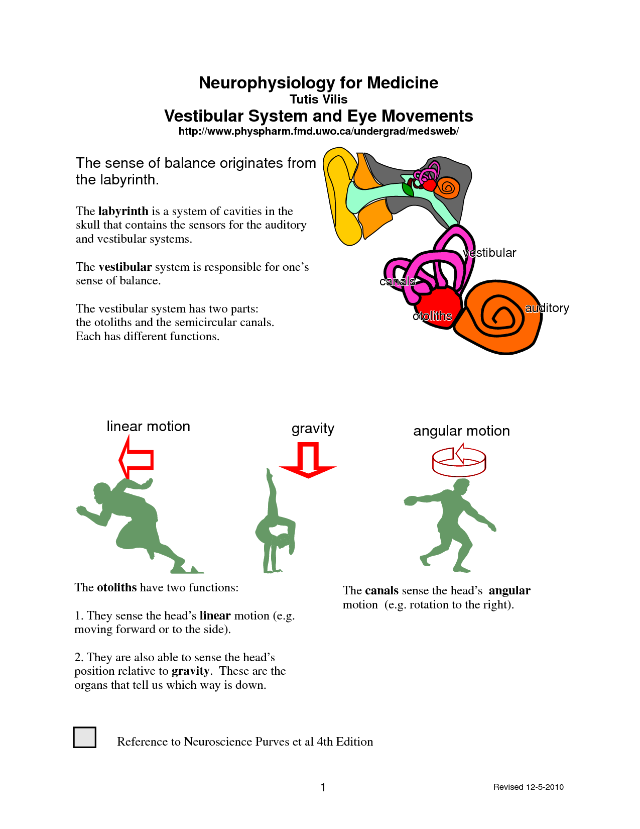Vestibular System And Balance