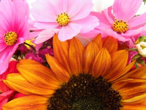 FarmMktFlowers-Kris30-EstrogenDay-IndianLake-Church091309 008