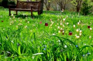 Olbich Gardens 104