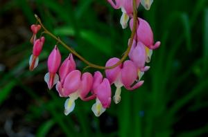 Pretty Little Pink Hearts